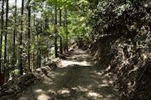 小倉山 登山道