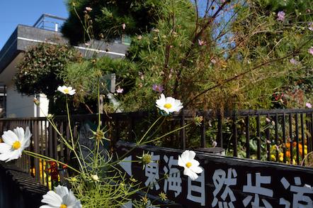 春日井三山 縦走 細野キャンプ場までの道