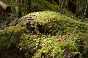 北八ヶ岳の天狗岳に登山!唐沢鉱泉からの日帰り登山と温泉で八ヶ岳「苔の森」を愛でる。