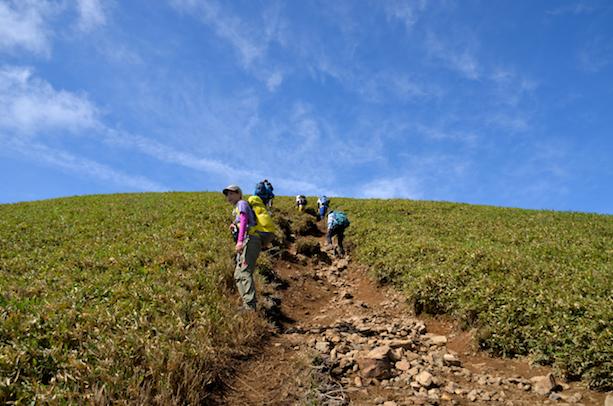 竜ヶ岳 セキオノコバ〜竜ヶ岳山頂