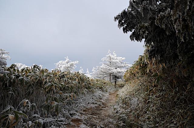 南沢山 ふるさと村自然園登山道
