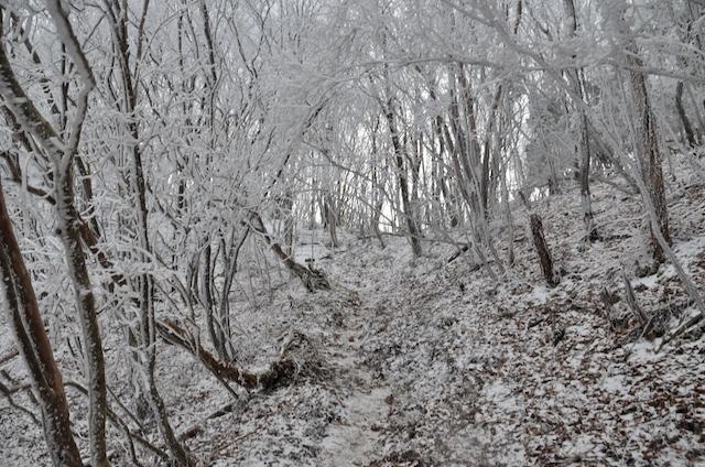 三峰山 登尾ルート 霧氷