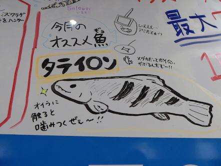 竹島水族館 スタッフの近況