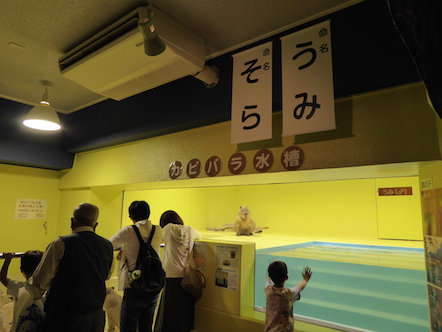 竹島水族館 カピバラ