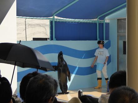 竹島水族館 アシカプール ラブ