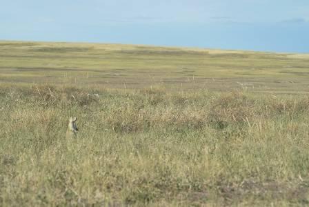 Badlands West End Sage Creek Rim Road Prairie Dogs Takemytrip Com