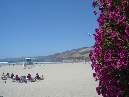 flowers and hills at pismo beach, california