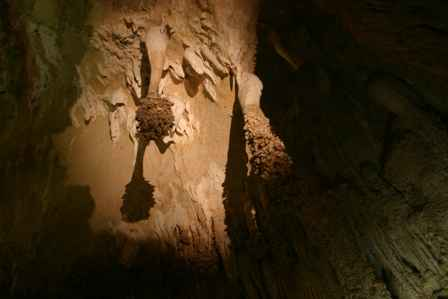 Lion's Tails, Big Room, Carlsbad Caverns National Park, New Mexico