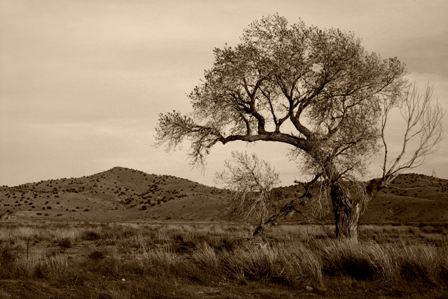 Old tree and hills, Lake Valley byway