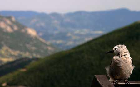 Bird, Rainbow Curve, Rocky Mountain National Park (RMNP)