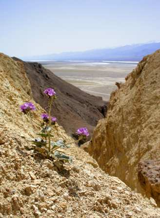 Golden Canyon, Death Valley National Park