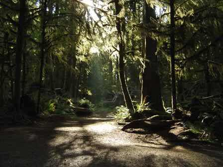 Trail to Marymere Falls, Olympic National Park