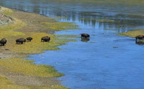 1200_07c_buffalo