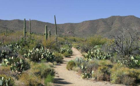 1200_05a_saguaro1