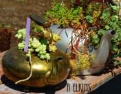 teapot_plants