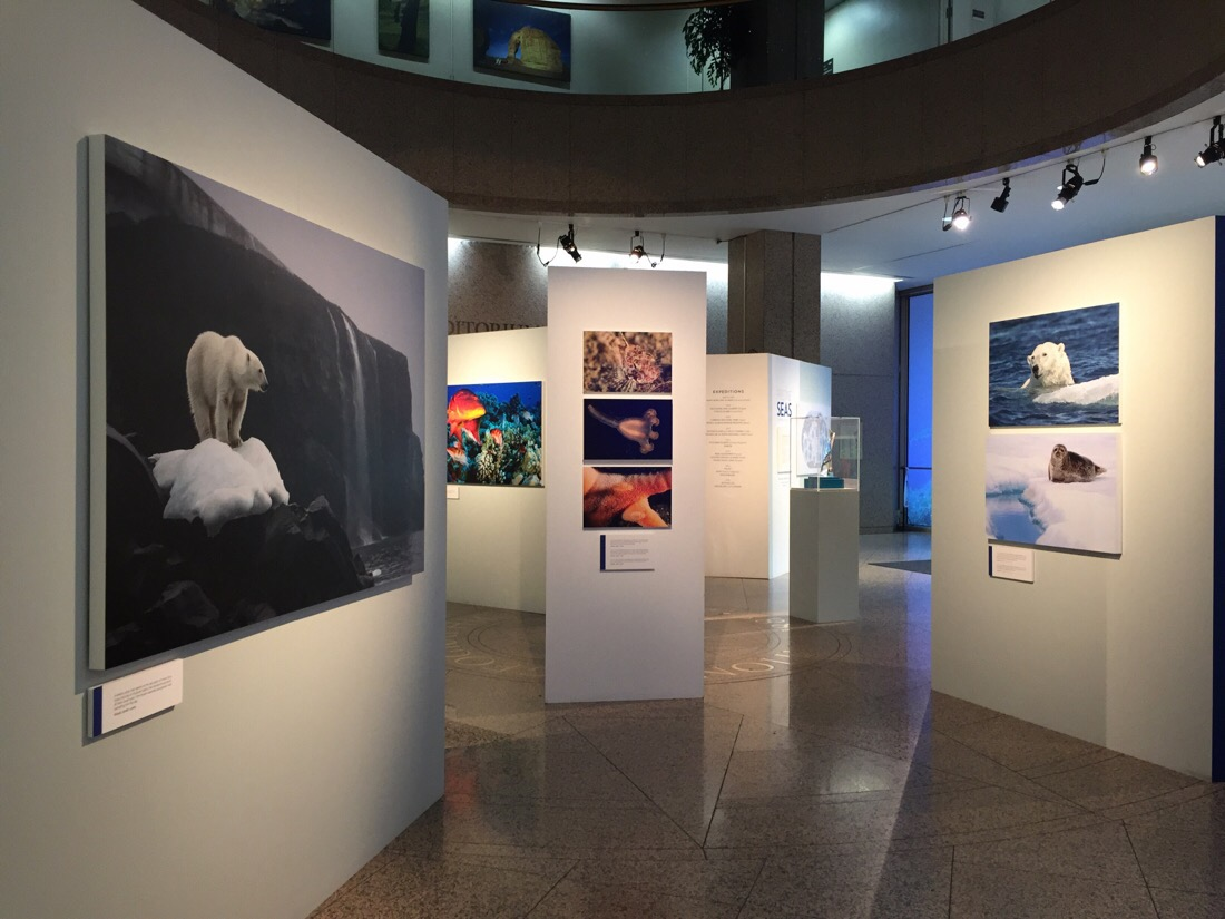 pristine seas exhibit at the national geographic headquarters in washington dc
