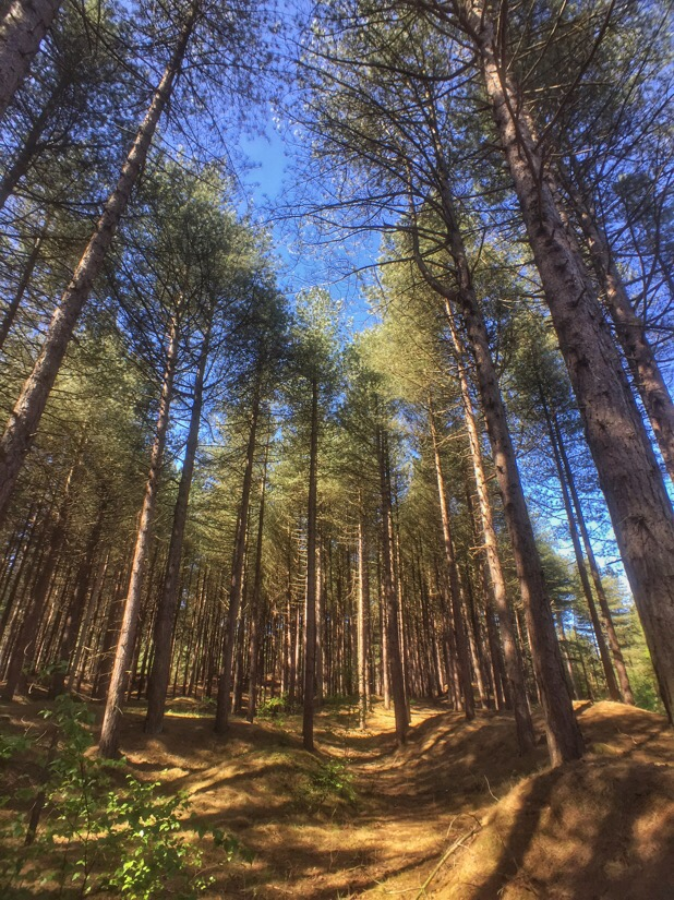 Ainsdale pine woods
