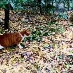 熱田神宮の猫