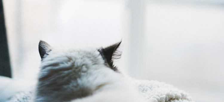 遠くに視線を向ける猫