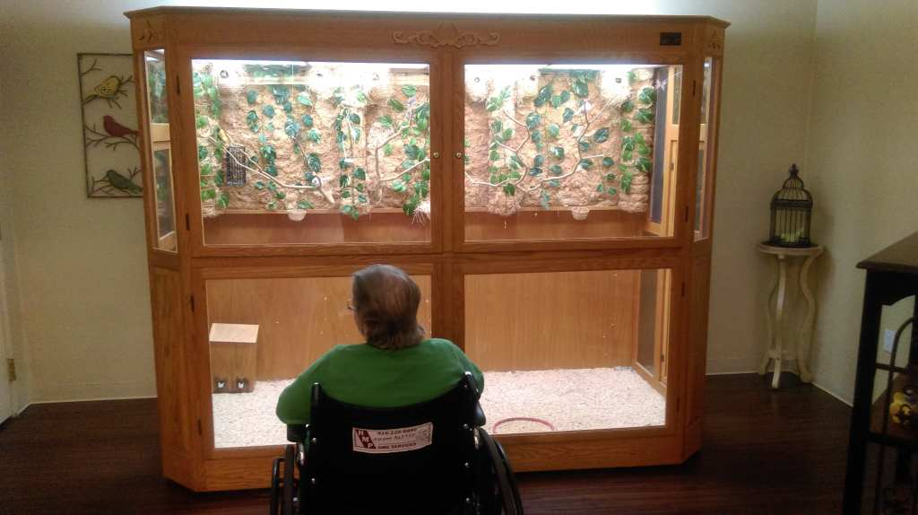 Photo: Grandma looks at a wall size bird cage in a skilled nursing facility I thought she'd never leave