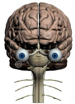 eyes and brain collaborate