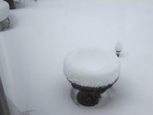 Winter Wonderland (3/5)