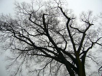 Tree at Sanjusangendo