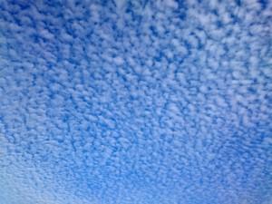 12月9日の大阪の空、キレイなうろこ雲が広がっています