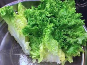 緑もあざやかなグリーンリーフレタス