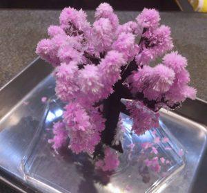 枯れ木に花が咲くこんなのをお客さまからいただきました!
