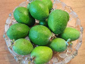 庭で採れたフェイジョアの果実