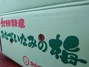 和歌山県の南部(みなべ)・印南(いなみ)の梅です
