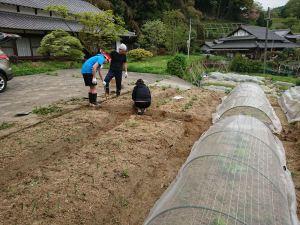 雑草を引いたり畝を直しています
