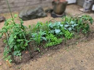 自然農法菜園の防虫ネットを外しました