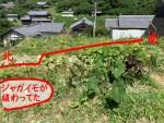 自然農法の野菜から気づかされること、、、いや、いろいろあり過ぎます!