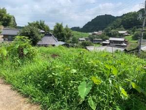山添村の自然農法の畑(7月23日)