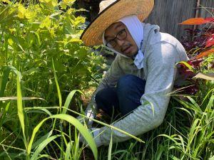自然農法畑の雑草を刈る大西さん