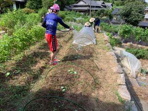 種蒔き、苗植えをして防虫ネットをかぶせます
