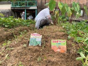 日本ほうれん草と玉葱ラピュタの種を蒔きました