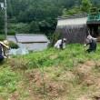山添村の自然農法畑(7月)