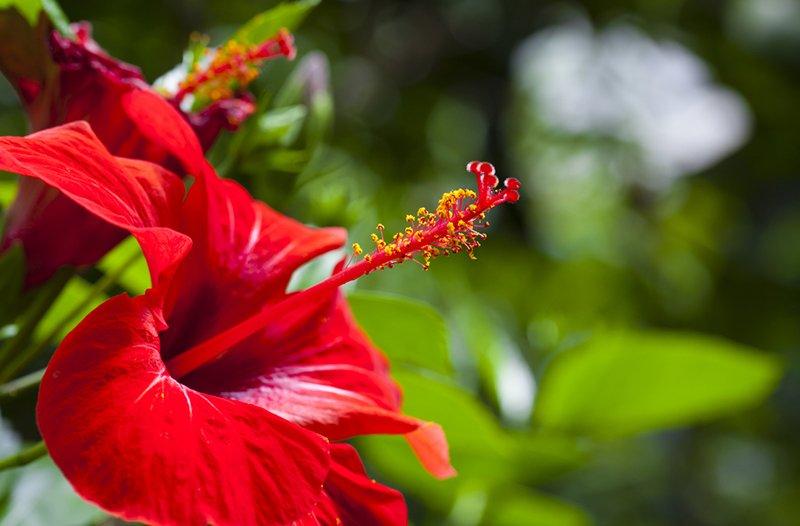 благоприятные комнатные цветы