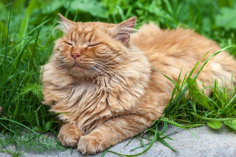 клещи у кота как лечить