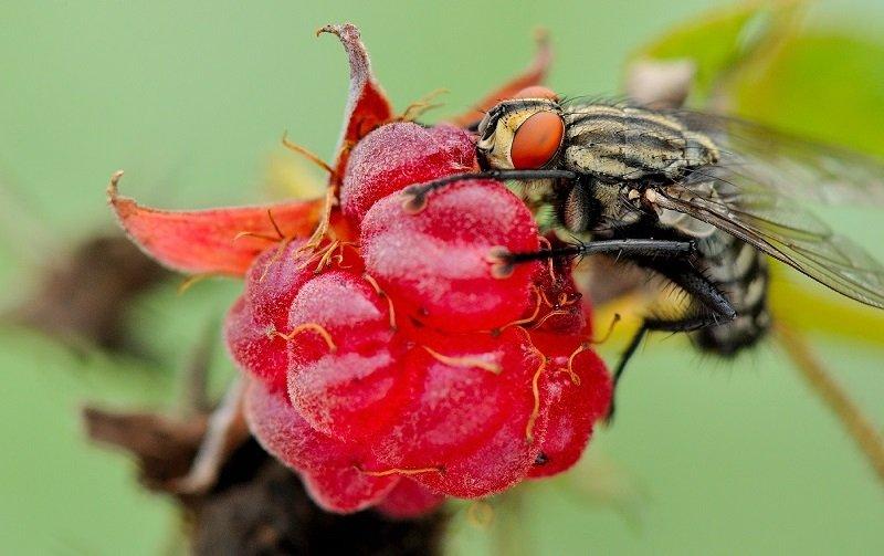 ловушка для мух