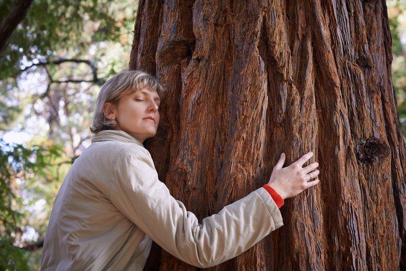 обнимать деревья полезно