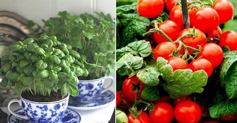 как выращивать зелень дома круглый год