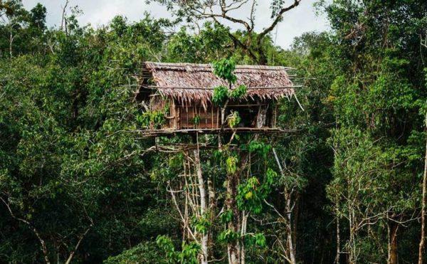 rumah suku korowai