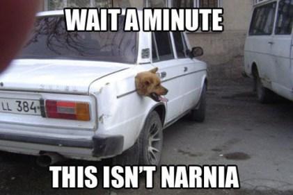 doggie-narnia