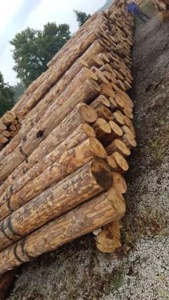 talaş için ağaç