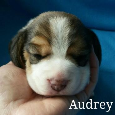 Audrey 2 weeks