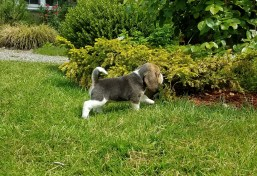 Phinney at Five Weeks